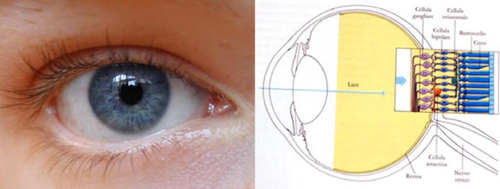 come-è-fatto-l'occhio
