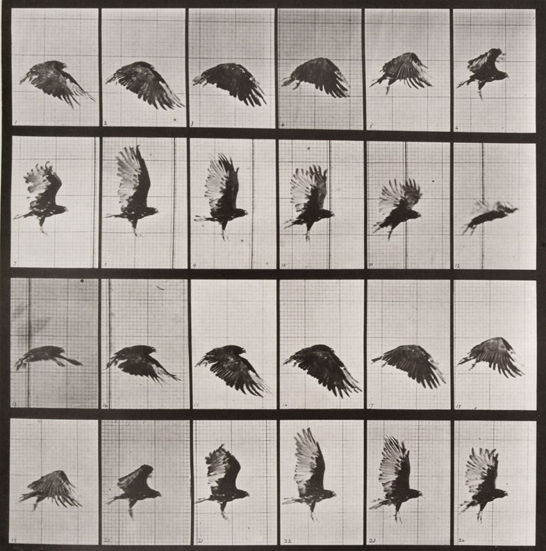 muybridge-opere-animal-locomotion-storia-della-fotografia1