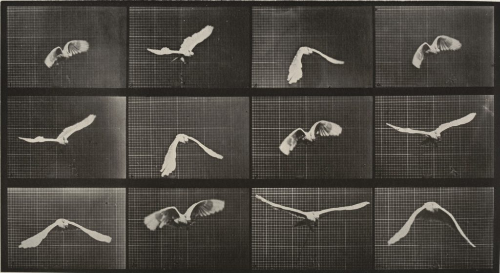 muybridge-opere-animal-locomotion-storia-della-fotografia-2