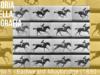 Eadweard-Muybridge-opere-ev