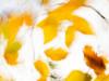 consigli-fotografia-artistica-nella-fotografia-naturalistica-pillole-di-fitografia-ev