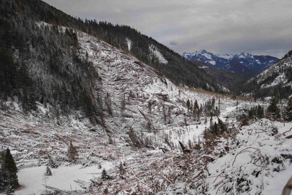 007-foresta-di-lavaze-tempesta-vaia-29-ottobre-2018-fallen