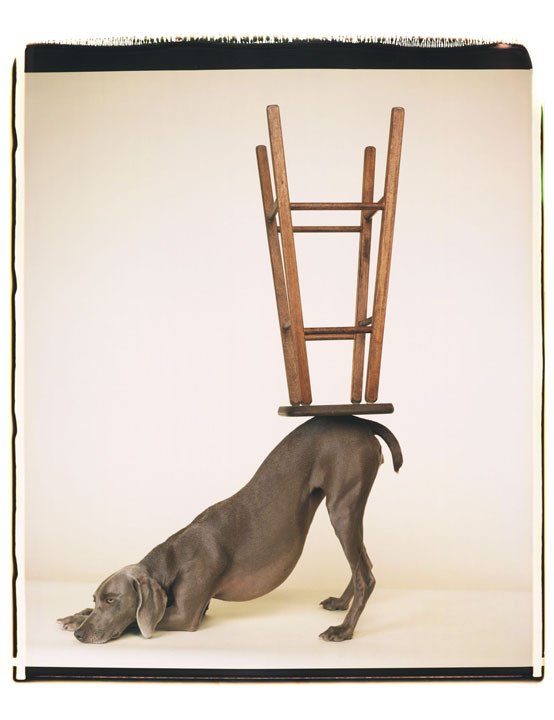 ricerca-fotografica-William_Wegman