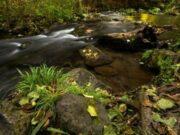 filtro-polarizzatore-fotografia-naturalistica-ev