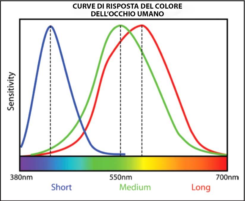 Curve-di-risposta-del-colore-dell_occhio-umano