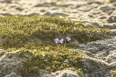fotografie-islanda-camilla-albertini-storytelling