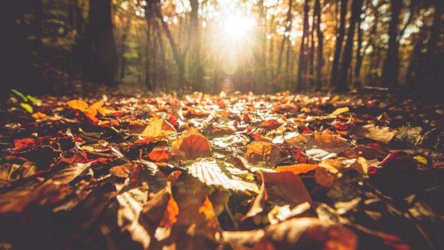 ev-foliage-fotografare-le-foglie-in-autunno