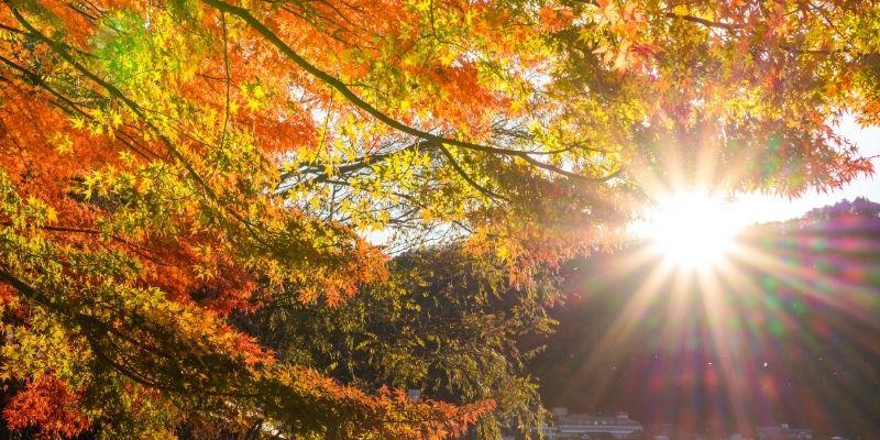 foglie-in-autunno-tramonto-foto