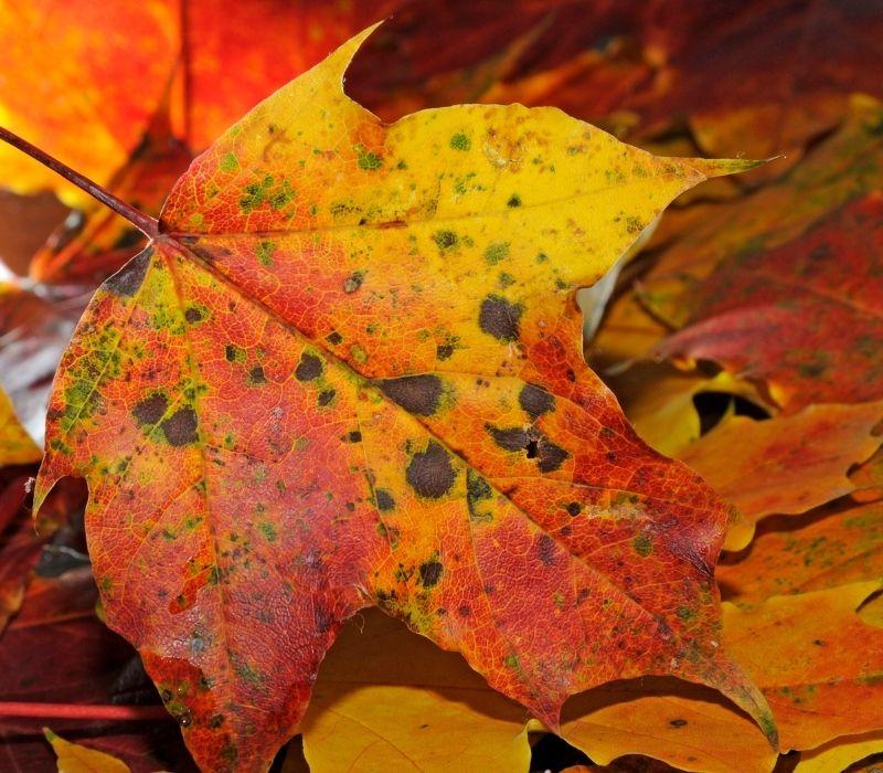 foliage-fotografare-le-foglie-in-autunno